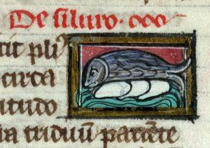 Silure, Thomas de Cantimpré, Liber de natura rerum, XIIIe siècle, Valenciennes BM ms. 320, f. 131