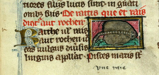 Valenciennes, Ms. 320, f. 130. Thomas de Cantimpré, Liber de natura rerum, dernier quart du XIIIe s.