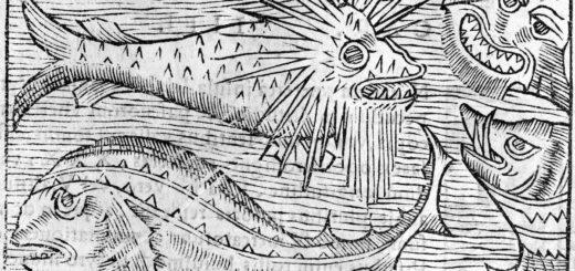 Olaus agnus, Historia de gentibus septentrionalis, Rome, 1555
